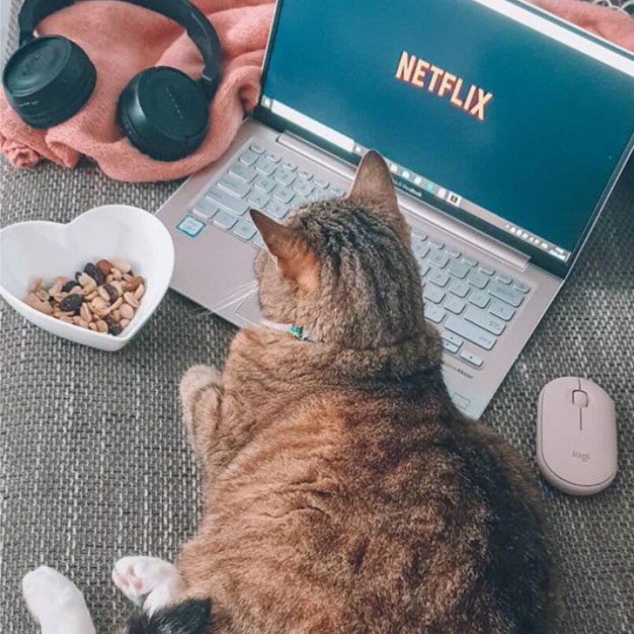 artykuł Netflix-1 kopia